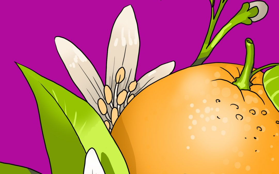 SAW Graphic Novel Development Month 1/6